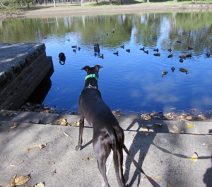 Lucy likes staring at the swans