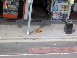 hot doggy on sizzling pavement