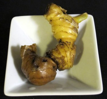 Tiny ginger grown from a cutting.