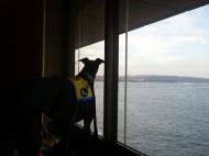 A room with a view - looking out from inside the Sydney Opera House.