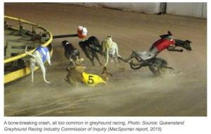 greyhoundracing