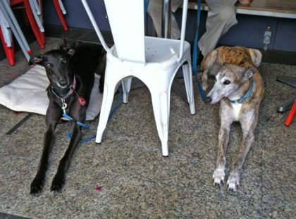 Our special guests Misty and Colin at Not Just Coffee...
