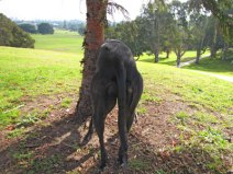 How beautiful is the greyhound derrière? <3