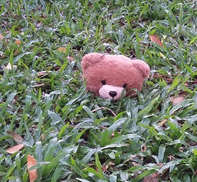 20180511_082614-bear
