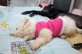 The two girls fast asleep.
